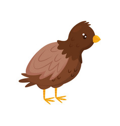 young brown chicken with orange beak and legs vector image