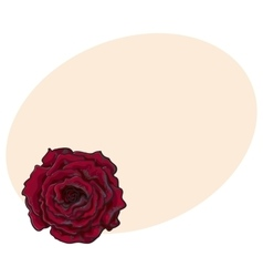 Deep red ruby rose top view isolated sketch vector image