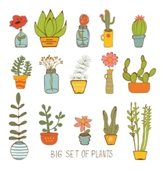 Beautiful set of hand drawn houseplants vector image