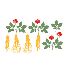 ginseng plant vector image