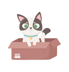 little cat with collar in box pets vector image
