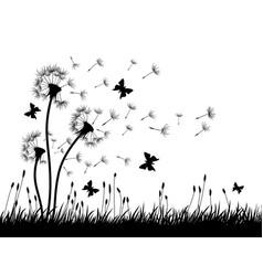 dandelions with butterflies vector image