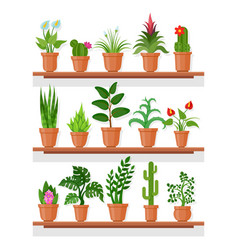 Indoor plants on shelf vector