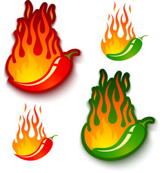 jalapeno and chili vector image vector image