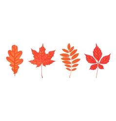Set of autumn leaves isolated on white Oak rowan vector image