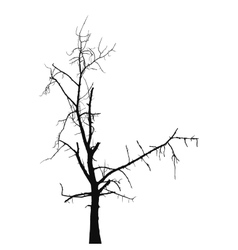 Silhouette old dry tree vector