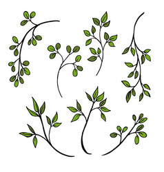 drawing herbs floral background vector image