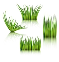 Fragments of the green grass isolated on white vector