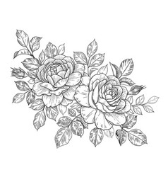 hand drawn floral bunch with roses buds and leaves vector image