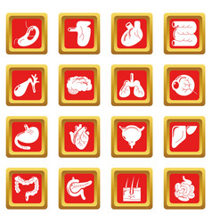 internal human organs icons set red square vector image