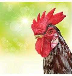 Rooster portrait vector