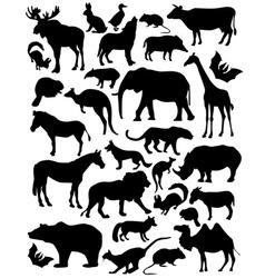 mammals vector image vector image