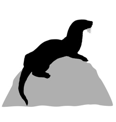 Otter on rock vector