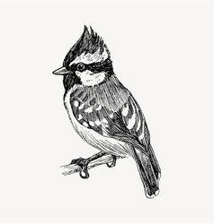 graphic hand drawn bird on retro graphic vector image