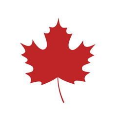 single red maple leaf on white background vector image
