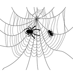 spider web fly trap vector image