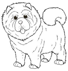 doodle animal for chow chow dog vector image