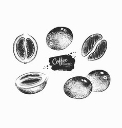 Collection coffee beans and berries vector