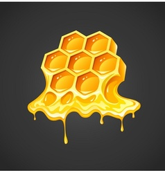 Honey in honeycombs vector image