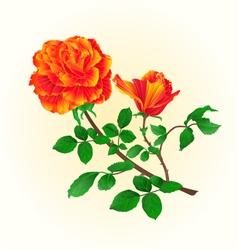 Flower orange rose with bud vintage vector image
