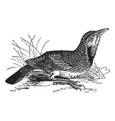 Eastern Meadowlark vintage vector image vector image