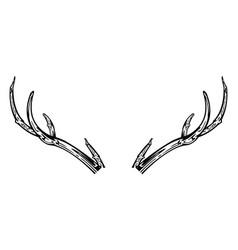 antlers reindeer hand drawn vector image vector image
