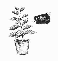 Black and white coffee tree sprout vector