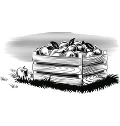 Crate of ripe apples vector