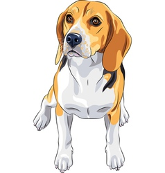 sketch dog Beagle breed sitting vector image vector image