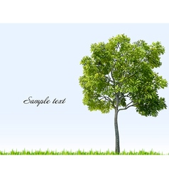 Summer landscape with sky green grass and tree vector image vector image