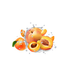 Apricots and peaches in splashes yogurt or milk vector