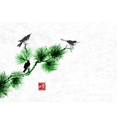 Birds on green pine tree branchtraditional vector