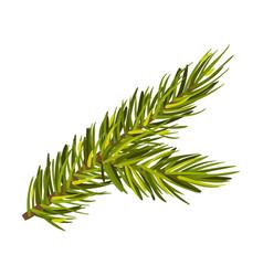 Elegant green spruce twig vector