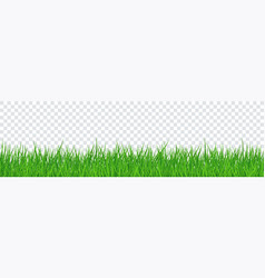 green grass isolated transparent background vector image