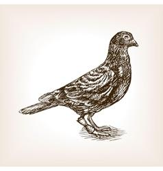 Post pigeon sketch vector image
