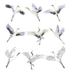 wild birds in flight animals in nature or in the vector image