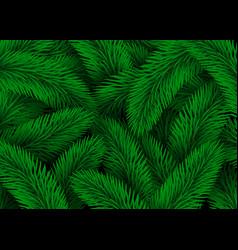 green fir tree branches design christmas vector image