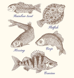 Design graphic set with fish vector