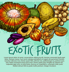 exotic fruit and tropical berry sketch poster vector image