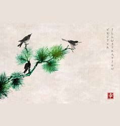 Three birds on pine tree branch traditional vector