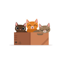 Three funny cats of diffferent colors in a box vector