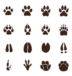Animals footprints vector image