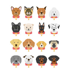 group of dog breeds and cat vector image