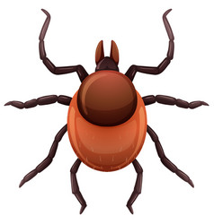 A mite tick on white background vector