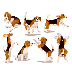 Cute cool beagle puppy set dogs vector