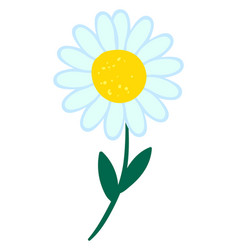 daisy flower on white background vector image