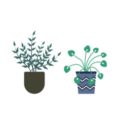 greenhouse plants in pots orangery flora flowers vector image