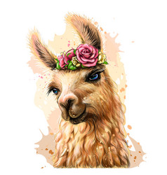 lama alpaca sticker on wall vector image