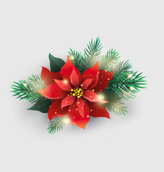 red poinsettia plant with christmas tree branches vector image