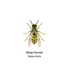 wasp on white background vector image